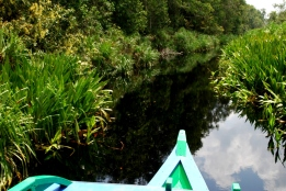 Tanjung Puting to Camp Leakey