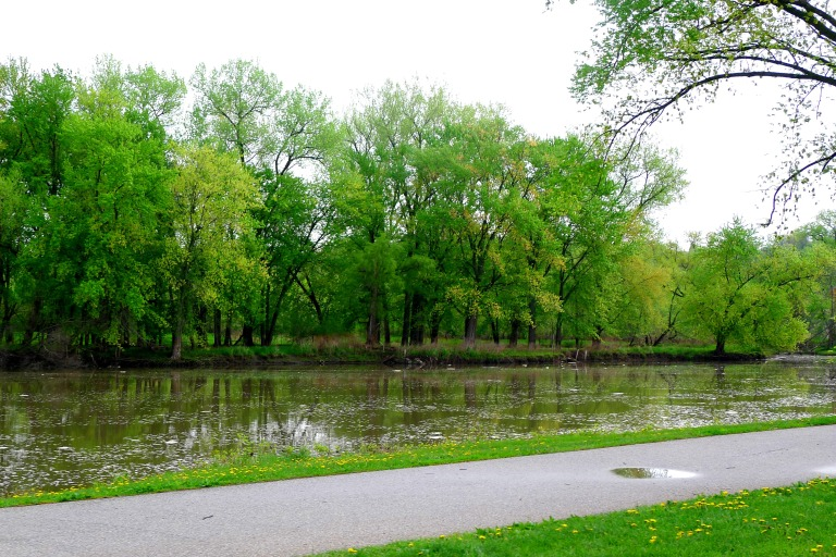 Iowa River that floods during rainstorm season. The park on its bank is in fact designed to be flooded. Engineering!